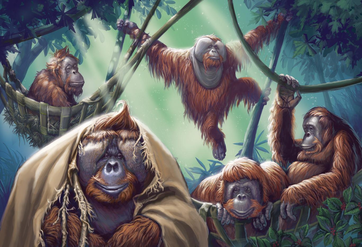 zoo-orangutans_FINAL
